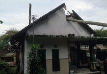 Diguncang Gempa, Pohon Kelapa Tumbang