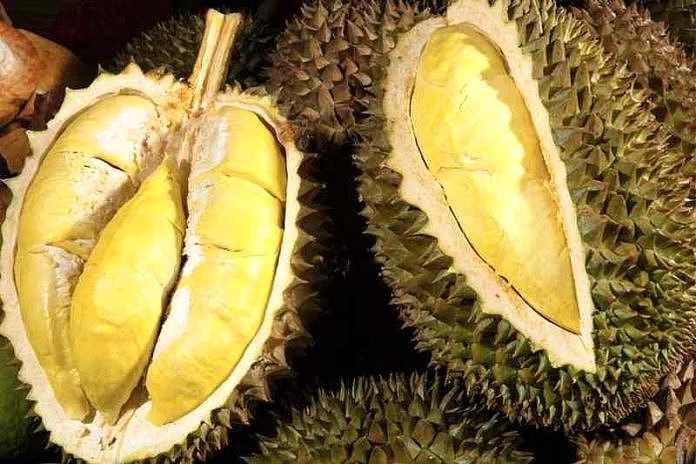 Durian. (BP/dok)
