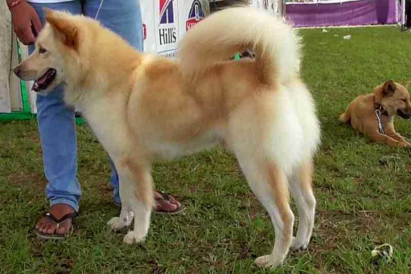 Nasi Anjing