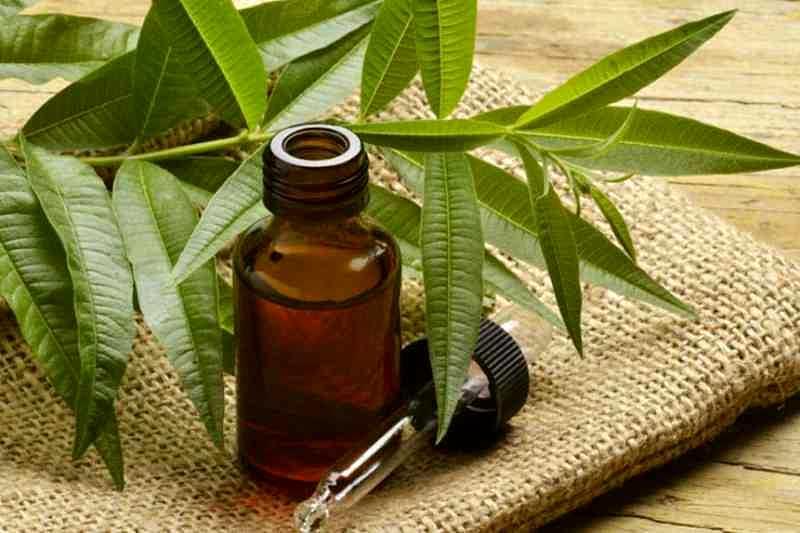 Image result for tea tree oil untuk jamur diruangan