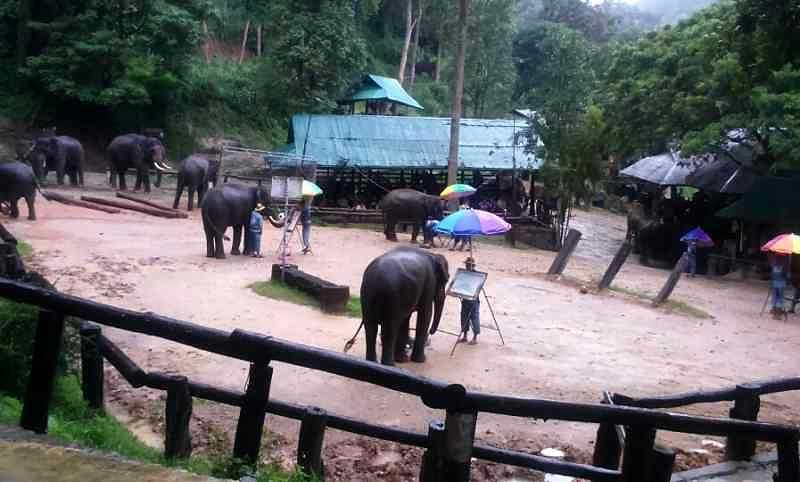 Gajah memperlihatkan keahlian melukisnya di hadapan penonton. (BP/iah)